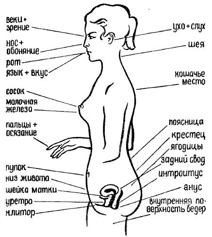 Эрогенные зоны женшины