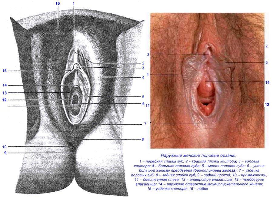 Физиология женского оргазма видео